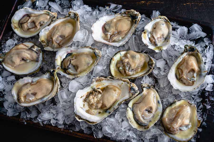 Shucked oysters on a bed of crushed ice